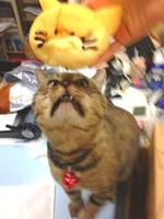 __.JPG猫パン