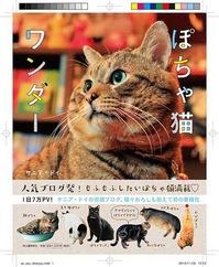 ぽちゃ猫.JPG